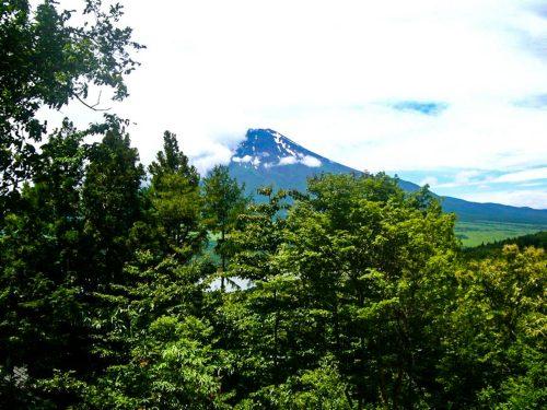 土地2913(881.18坪)/山林/所有権/富士山全望・881坪