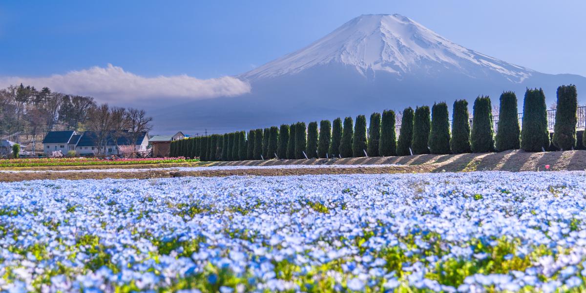 山中湖の花の都公園