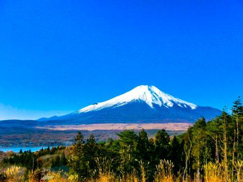 山中湖村/原野/土地990㎡(299.47坪) – 富士五湖周辺の不動産 ...
